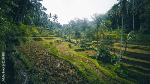 Tuinposter Wijngaard Aerial view Tegalalang Rice Terrace in Ubud, Bali, Indonesia. Panoramic view of the rain.