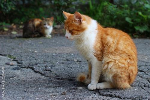 Photo  Beautiful and sad homeless cat