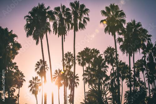 Keuken foto achterwand Amerikaanse Plekken Palm trees and californian sunset