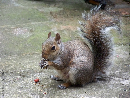 Foto op Canvas Eekhoorn Squirrel and the nut