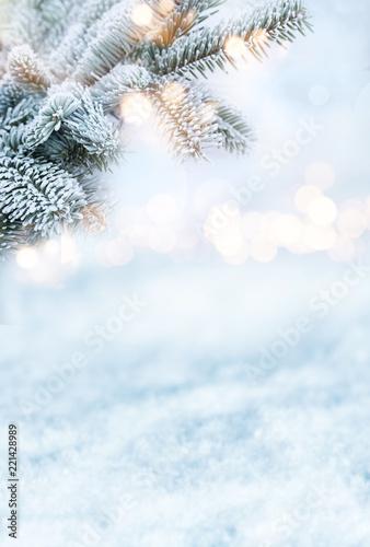 Fotografía  Fir branches in winter