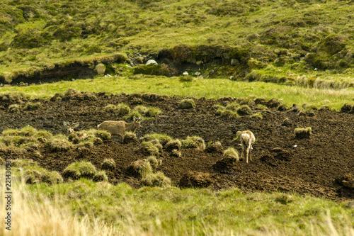 Foto op Canvas Pistache WILD DEERS