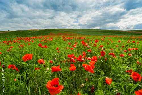 Picturesque landscape with poppy flowers the blue cloudy sky