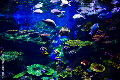 Foto op Canvas Onder water Colorful coral reef with many fishes in aquarium tank