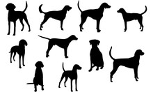 American Foxhound Svg Files Cricut,  Silhouette Clip Art, Vector Illustration Eps, Black  Overlay