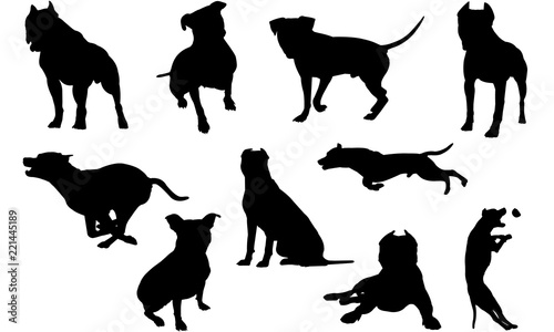 American Pit Bull Terrier Dog svg files cricut,  silhouette clip art, Vector ill Canvas Print