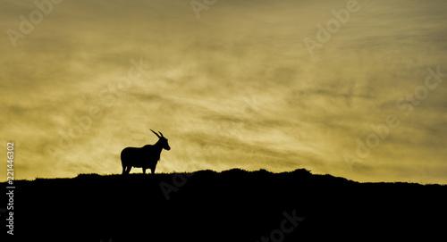 Valokuvatapetti Eland At Dawn