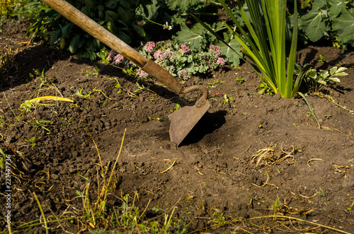 Fotografia, Obraz  The a man frees a garden of weeds with a hoe