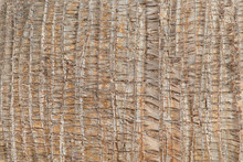 Closeup Of A Vertical Texture Of A Palm Tree.