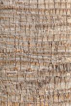 Closeup Of Palm Tree Texture