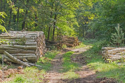Tuinposter Weg in bos Leśna droga.
