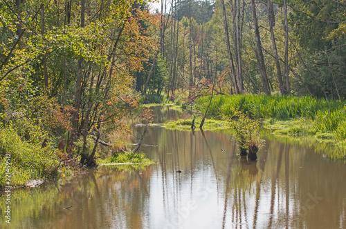 Staande foto Rivier Rzeka o poranku.