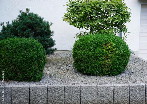 Vorgarten Garten Mit Buxus Kies Und Kantsteinen Buy This Stock