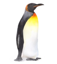 Watercolor Isolated Illustration Of A Penguin, Drawing By The Hand Of A Polar Animal