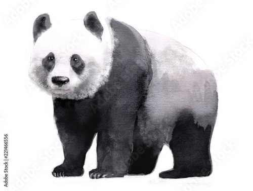 Fotografie, Obraz  watercolor illustration of panda, isolated drawing by hand of animal