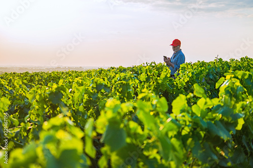 Fototapeta A french winegrower in his vines at sunset obraz