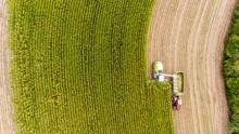 Maisernte Auf Feld Mit Traktor...