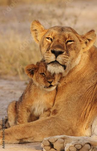 Staande foto Leeuw Lion Cub with mom