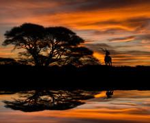 Kudu Silhouette Reflection