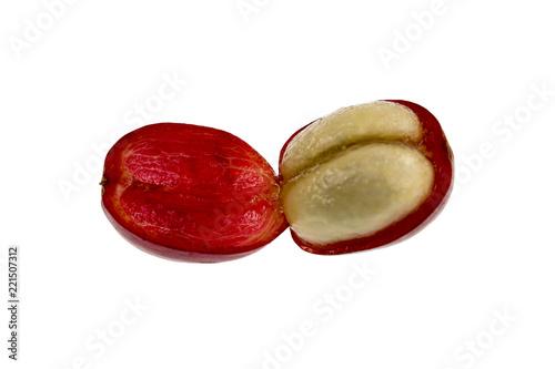 Coffee Cherry Fruit Anatomy