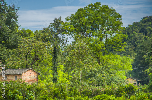 Foto op Aluminium Guilin Forest and rural scenery