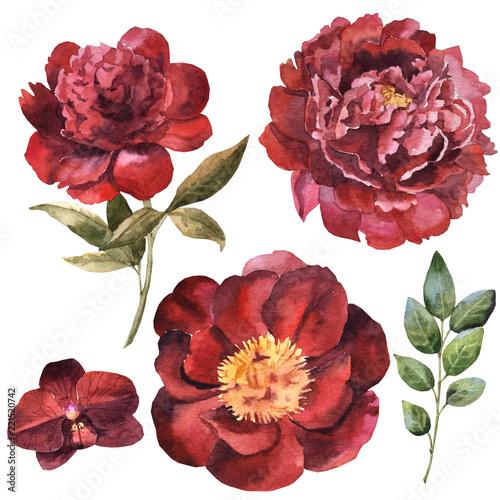 akwarela-bordowy-kwiat-zestaw-z-lisci-i-eukaliptusa