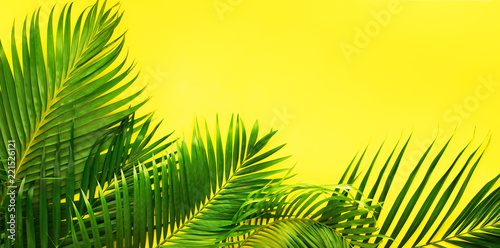 Foto auf AluDibond Blumen Variations Tropical Palm Leaves Yellow Flat Lay