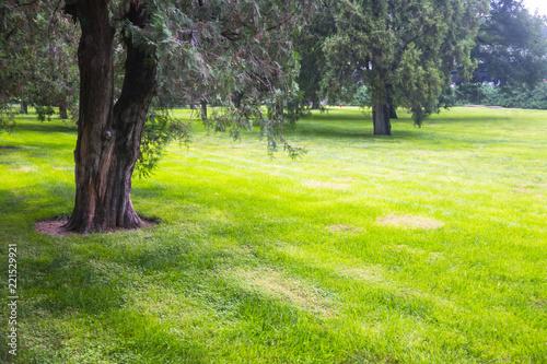 Deurstickers Golf Summer lawn at sunset
