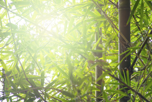 Foto op Plexiglas Bamboe bamboo leaf in bright sunlight background