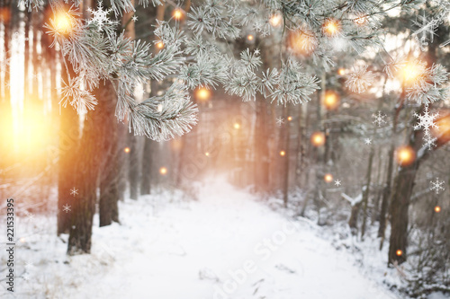 Photo sur Toile Saumon Christmas background. Winter forest with glowing snowflakes. Christmas forest with snowy road. Pine branches with hoarfrost. Xmas and New Year time in december