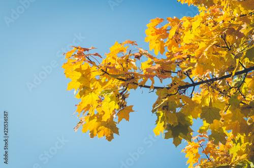 Foto op Canvas Herfst Autumn scene in a park