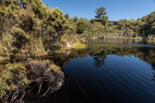 Dark, Tannin-stained Water Of Lake Wilkie Surrounded By Native Forest. In The Catlins, Otago, New Zealand.