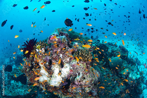 Poster Coral reefs Beautiful colorful coral reef and tropical fish underwater in Maldives