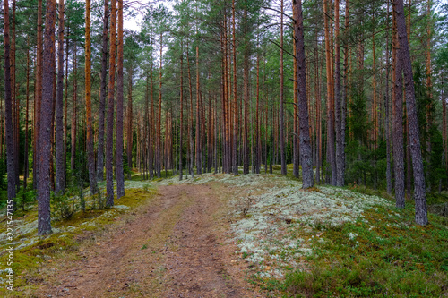 Tuinposter Cappuccino simple gravel country road in summer in forest