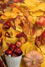 Autumn Harvest - Fruits And Vegetables Are On Fallen Yellow Leaves, Apples, Pumpkins, Rowan And Pepper. Perfect Background For Autumn Season.