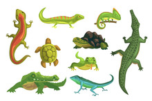 Reptiles And Amphibians Set Of Vector Illustrations