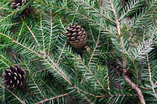 Fotografija  Branches of an evergreen tree with cones, stacked on pile on a table