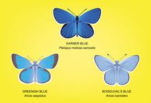 Butterfly Blue Set Vector Illustration
