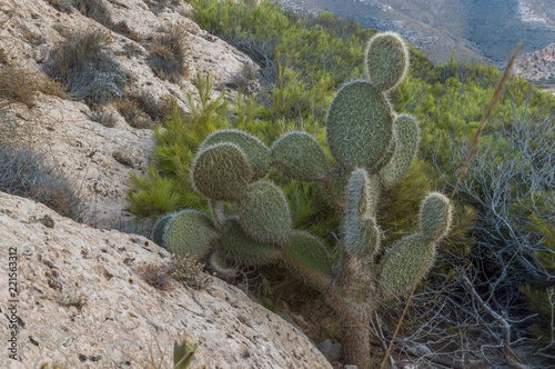 Cactus and desert rocks