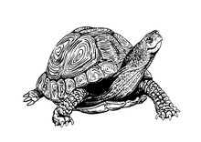 Graphical Tortoise Isolated On...