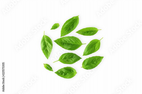 isolated fresh green basil herb leaves  on white background top view Wallpaper Mural