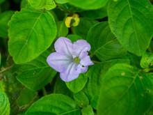 Small Purple Flower In Green Leaf Background