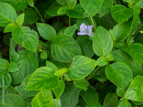 Small Purple Flower In Green Leaf Background Buy This Stock Photo And Explore Similar Images At Adobe Stock Adobe Stock,Goodwill Furniture Donation Drop Off