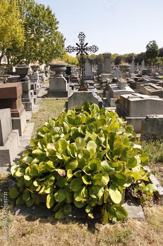 Keuken foto achterwand Begraafplaats Paris - Cimetière de Montrouge