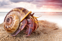 Colorful Hermit Crab On The Beach.