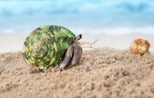 Colorful Hermit Crab On The Be...