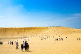 鳥取砂丘、オアシス、馬の背
