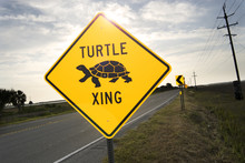 Turtle Crossing Sign Tybee Isl...