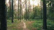 Beautiful Nature Forest Trees ...
