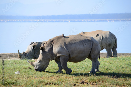 Tuinposter Neushoorn A close up photo of an endangered white rhino / rhinoceros face,horn and eye. South Africa